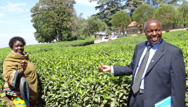 UoK Vice-Chancellor showing the Vice-Chancellor, University of Energy & Natural Resources how tea is picked.